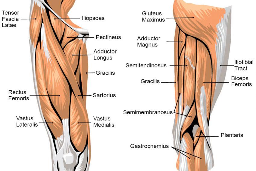 Radiografia alle gambe